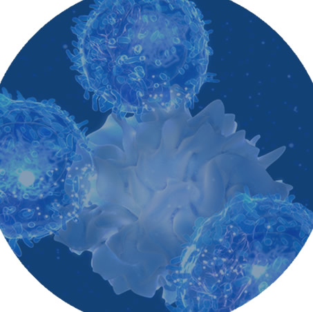 Photo of NK cells